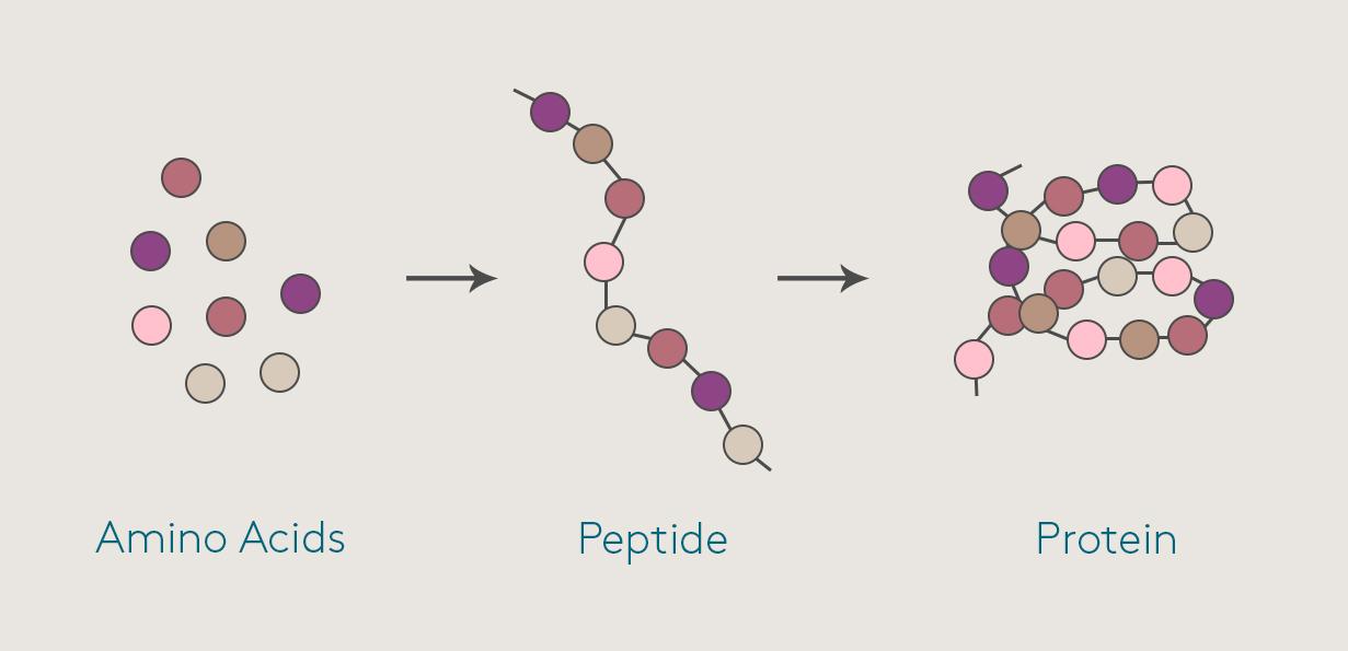 peptides serum